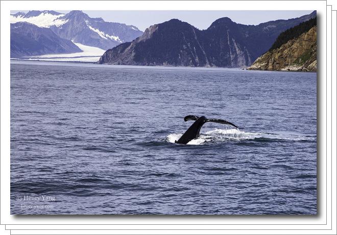 kenai-fjords