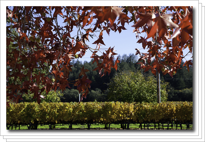 Napa Valley Fall Color
