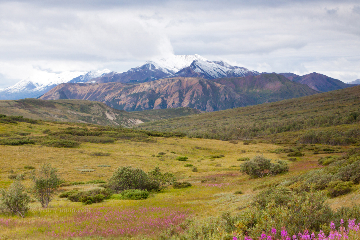 denali national park women The rewards of hiking in denali are many: spectacular vistas, encounters with wildlife, and the experience of being alone in wilderness however, denali has.
