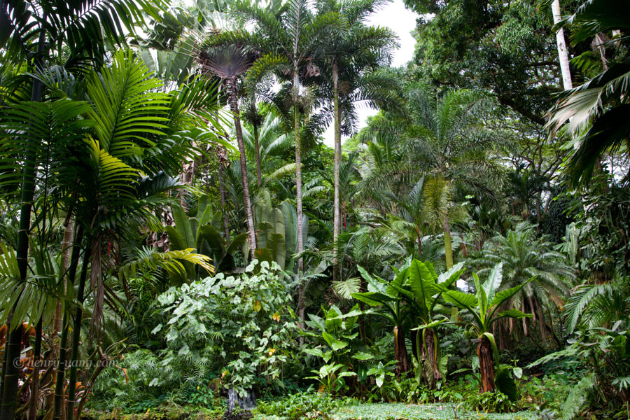 Hawaii Tropical Botanical Garden, Big Island, Hawaii, 1/2015