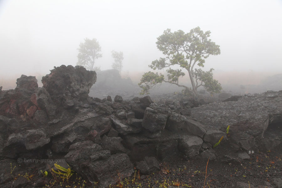 View on Chain of Craters Road, Hawai'i Volcanoes National Park, Hawaii, 1/2015