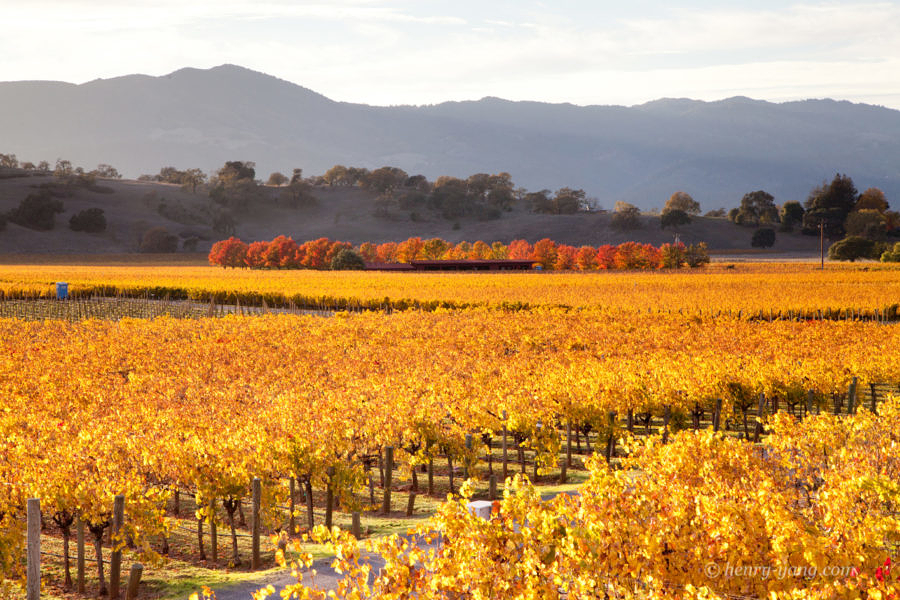 Napa Valley Fall Color, Silverado Trail, Napa, California, 11/2015
