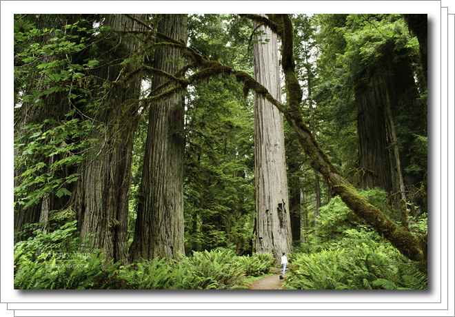 0607-redwood-national-park.png