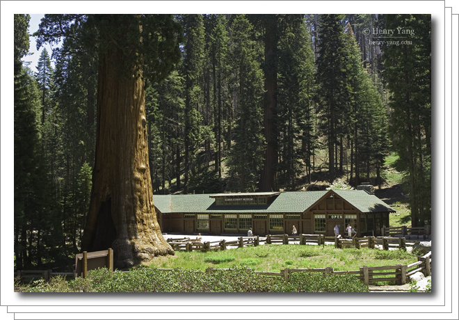 0705-sequoia.png
