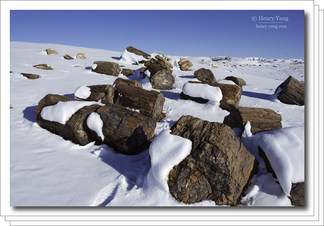 0802-petrified-forest.png