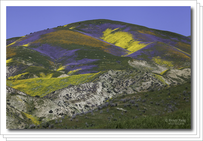 1704-carrizo-plain-wild-flowers.png