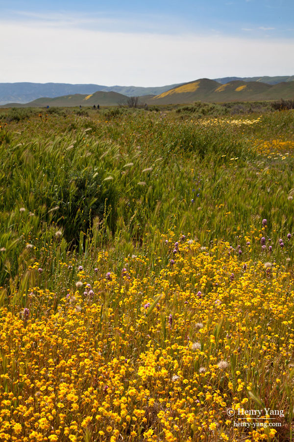carrizo-plain-wild-flowers-0910.jpg