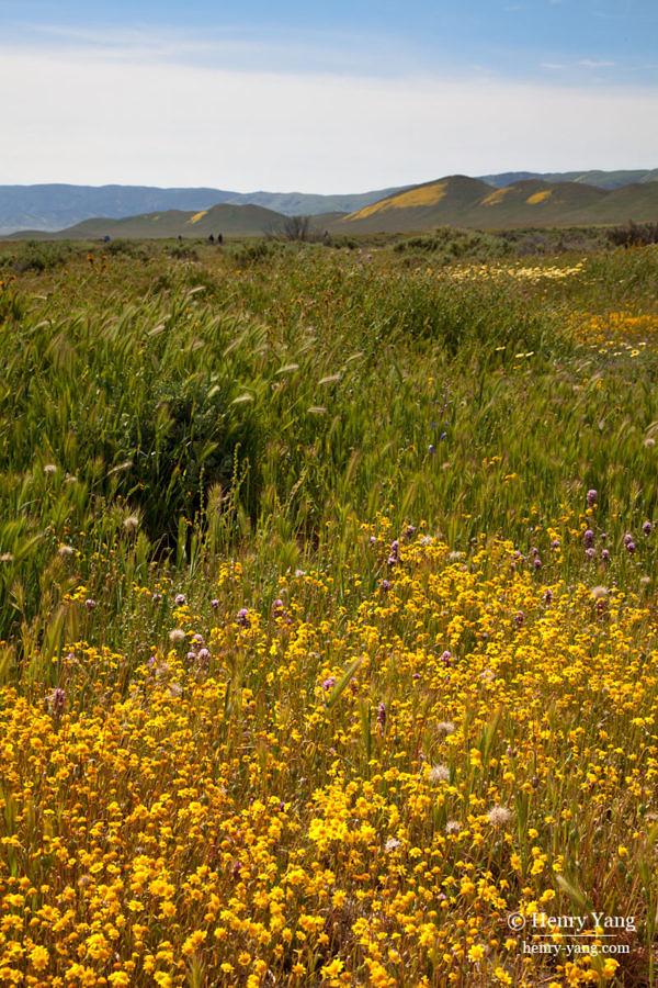 carrizo-plain-wild-flowers-0910.jpg