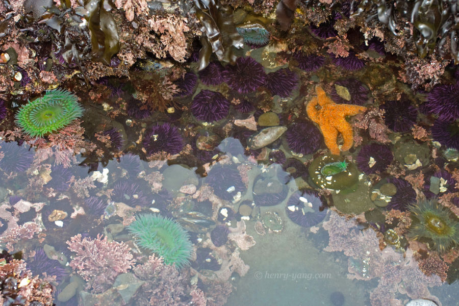 Tide Pools, Half Moon Bay, California, 2/2009