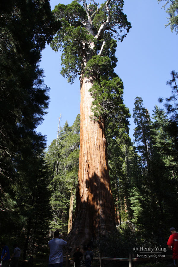 General Grant Tree, Kings Canyon National Park, California, 5/2007