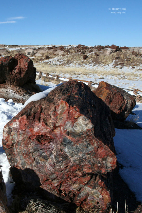 Petrified Trees, Petrified Forest National Park, Arizona, 2/2008