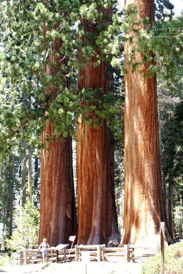 Sequoia National Park, California, 5/2007