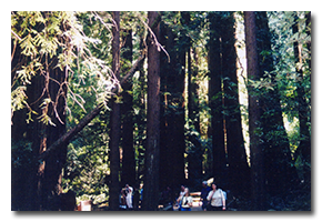 blog-0209-muir-woods.png
