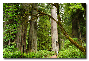 blog-0607-redwood-national-park.png
