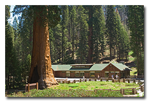 blog-0705-sequoia.png