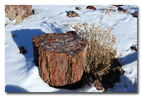 blog-0802-petrified-forest.png