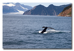 blog-1508-alaska-kenai-fjords-national-park.png