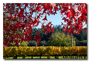 blog-1611-napa-fall-color.png