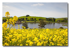 blog-1703-ed-levin-wildflowers.png