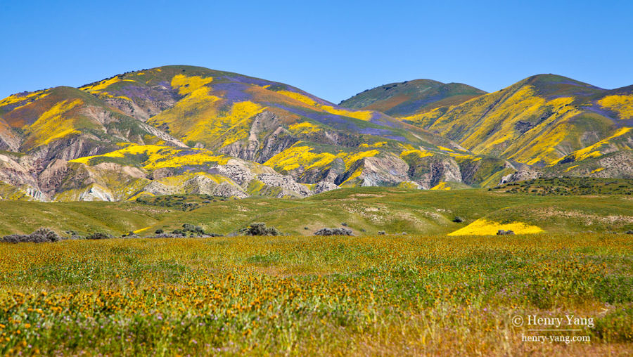 carrizo-plain-wild-flowers-0725.jpg