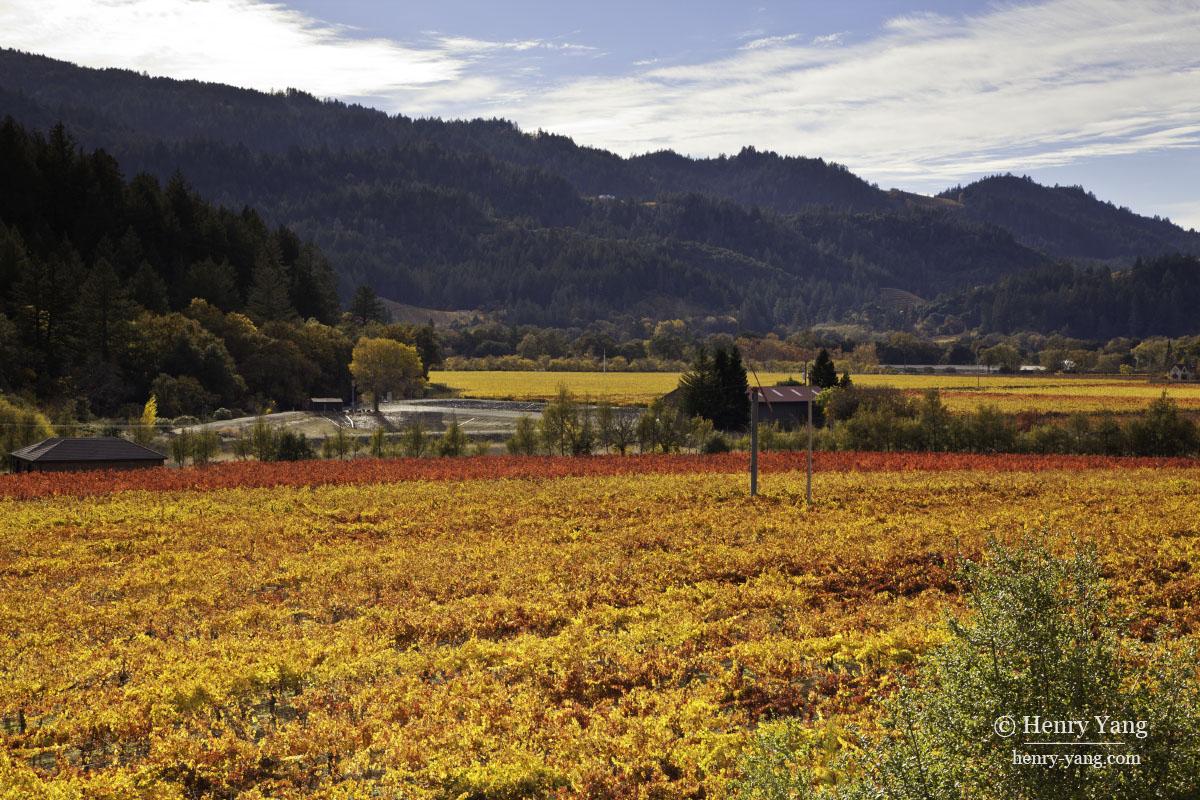 Napa Valley Fall Color 2015  California